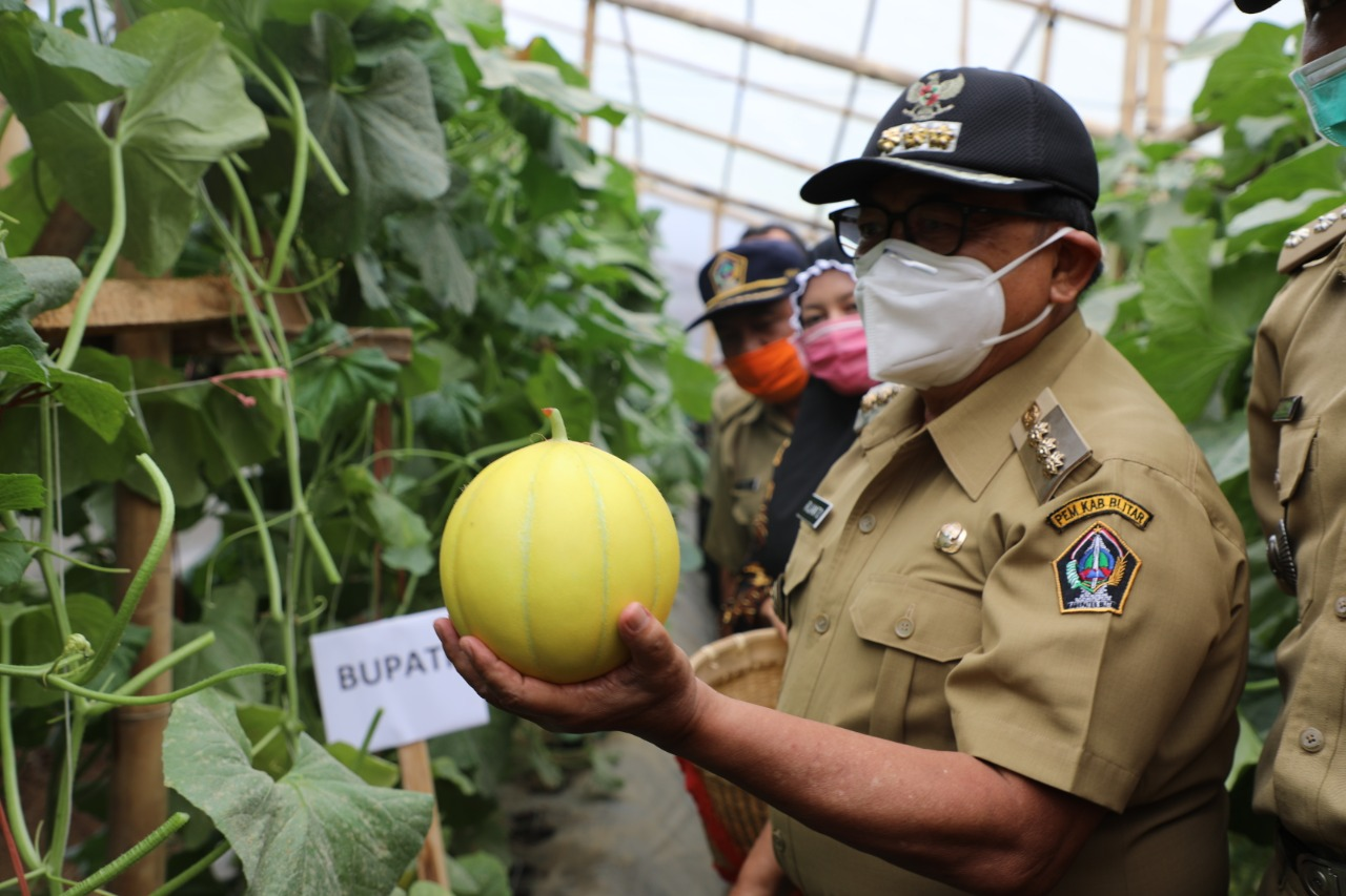 Sukses Budidaya Buah Melon, Millenial Desa Sumberkembar  Diapresiasi Bupati Blitar